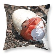 Hatching Pelican Throw Pillow
