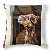 Haughty Throw Pillow by Nikolyn McDonald