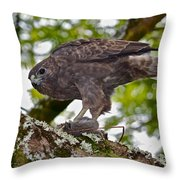 Hawaiian Hawk With Mouse Throw Pillow