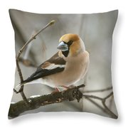 Hawfinch Throw Pillow