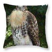 Hawk 2 Throw Pillow