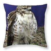 Hawk 3 Throw Pillow