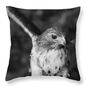 Hawk Attack Black And White Throw Pillow