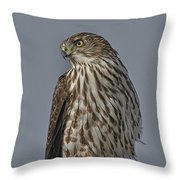 Hawk Beauty On The Lookout Throw Pillow