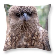 Brown Hawk Face Profile Throw Pillow