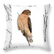 Hawk Framed In Branch Outline Throw Pillow