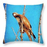 Hawk In A Glow Throw Pillow