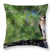 Hawk In Tree Throw Pillow