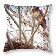 Hawk Nesting IIi Throw Pillow