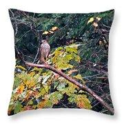 Hawk On A Limb Throw Pillow