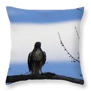 Hawk On Branch Throw Pillow