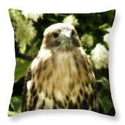 Hawk Portrait Throw Pillow