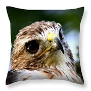 Hawk - Raptor - Living The Good Life Throw Pillow