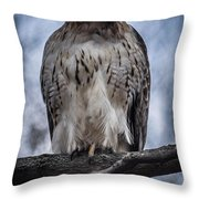 Hawk Red Tailed Throw Pillow
