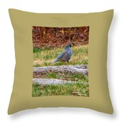 Quail Scout Throw Pillow