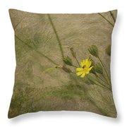 Hawksbeard Throw Pillow