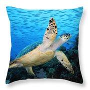 Hawksbill On Eldorado Throw Pillow
