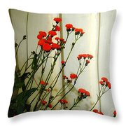 Hawkweed In Late Autumn Sun Throw Pillow