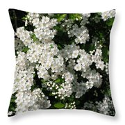 Hawthorn In Bloom Throw Pillow