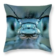 Head And Compound Eyes Of Damselfly Throw Pillow