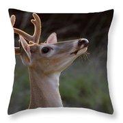 Head High Throw Pillow