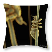 Head Lice Throw Pillow