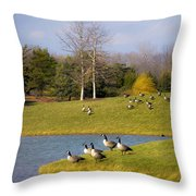 Heading South Throw Pillow by Julie Palencia