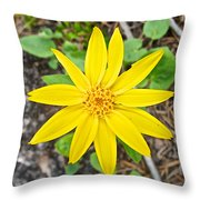 Heartleaf Arnica In Lake Louise Rv Park In Banff National Park-alberta Throw Pillow