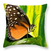 Hecale Longwing Butterfly Throw Pillow