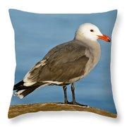 Heermanns Gull On Rock Throw Pillow