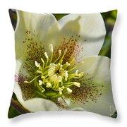 Helleborus Bright Throw Pillow