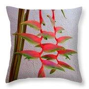 Heliconia Platystachys Throw Pillow