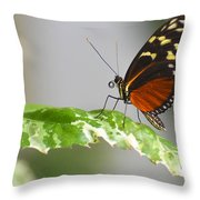 Heliconius Butterfly On Green Leaf Throw Pillow