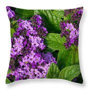 Heliotrope Flowers In Bloom Throw Pillow