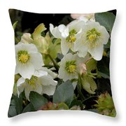 Hellebore And Friends Throw Pillow