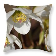 Helleborus Niger - Christrose Throw Pillow