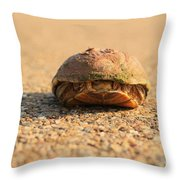Hello  Anyone Home Throw Pillow
