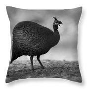Helmeted Guineafowl Throw Pillow