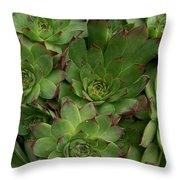 Hen And Chicks Throw Pillow by Sharon Duguay