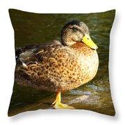 Hen Mallard Duck Throw Pillow