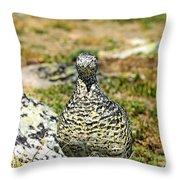 Partridge 3 Throw Pillow