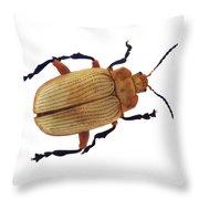 Henry Lin Beetle Throw Pillow