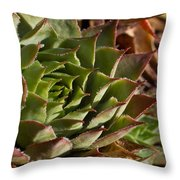 Hens And Chicks Sedum 1 Throw Pillow