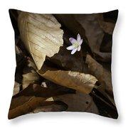 Hepatica In Filtered Light Throw Pillow