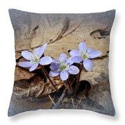 Hepatica Wildflowers - Hepatica Nobilis Throw Pillow