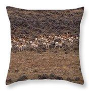 Herd Of Antelope   #8552 Throw Pillow