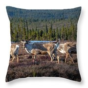 Herd Of Broad Pass Throw Pillow