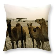 Herd Of Camels In A Farm, Abu Dhabi Throw Pillow