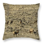 Herd Of Elk   #3218 Throw Pillow