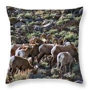 Herd Of Horns Throw Pillow